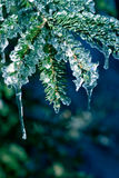 Ice on Pine Tree stock photos
