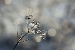 Ice on a Plant. After a rain all night and then turning to snow everything was frozen Royalty Free Stock Photo