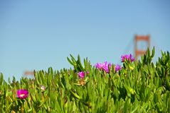 Ice Plant Ridge royalty free stock images