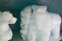 Ice polar bears Stock Photo