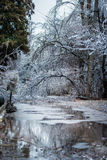 Ice rain. Cold weather and reflection, Details of an ice storm. After an ice storm many trees and leaves are frozen. Every detail is beautiful and simulates Stock Image