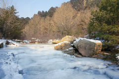 Ice river. The ice river in forest Stock Images