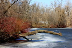 Ice on the river Stock Photography