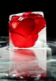 Ice and rose Royalty Free Stock Photos