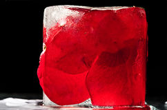 Ice and rose Royalty Free Stock Images