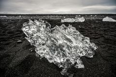 Ice sheet lying on a black beach in Iceland, ocean coast near J royalty free stock photo