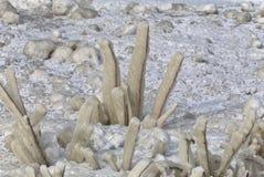 Ice on the shoreline Stock Image