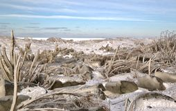 Ice on the shoreline Royalty Free Stock Images