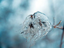 Ice shrubs. Ice-covered bushes, abstract, macro photography Stock Photos