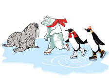 Ice skating polar bear and penguins. Next to a walrus Royalty Free Stock Image