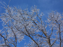 Ice in the Skies. Tree covered in thick ice after storm against blue sky royalty free stock images