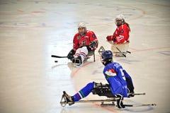 Ice Sledge Hockey Royalty Free Stock Images