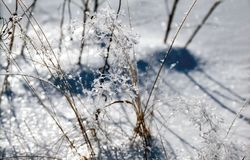 Ice slick on the grass Royalty Free Stock Photo