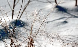 Ice slick on the grass in sunny day Royalty Free Stock Photos