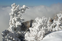Ice and snow-covered pine tree two. Just after the first storm of winter, ice and snow coat the branches of a pine tree on top of the Sandia Mountains Stock Photo