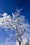 Ice and Snow Covered Tree Royalty Free Stock Images
