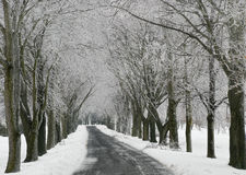Ice and snow covered trees and road Royalty Free Stock Image