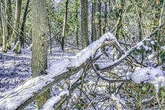 Ice and snow on fallen branch at a northern river royalty free stock photo