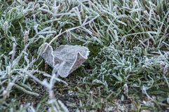 Ice mat with vegetation and leaves. Ice is the state in which the water stays when it is at low temperature and gives it the solid consistency Royalty Free Stock Images