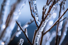 Ice sticking to branches Royalty Free Stock Images