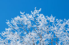 After the Ice Storm Royalty Free Stock Photos