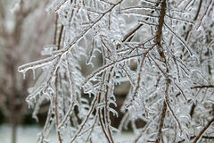Ice Storm Stock Photos