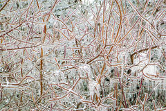 Ice Storm Stock Photo