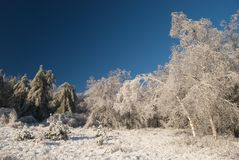 Ice Storm Royalty Free Stock Photo