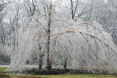 Ice storm. Birch tree in ice storm Royalty Free Stock Photos