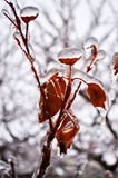 Ice Storm Royalty Free Stock Image