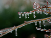 Ice Storm. A branch covered in ice after a rain and ice storm in northeast united states Royalty Free Stock Photo