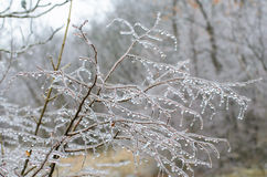 Ice storm on branches Royalty Free Stock Image