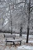 Ice storm on branches Stock Photo