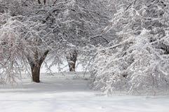 Ice Storm Stock Photography