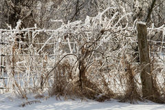 After an Ice Storm in the Countryside, Prince Edward County, Ontario Royalty Free Stock Photography