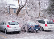 Ice Storm Damage. Trees which have fallen onto cars in a parking lot due to the extreme weight of the ice from an ice storm Royalty Free Stock Photography