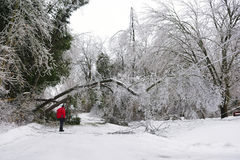Ice Storm - December 22, 2013 Southern Ontario Royalty Free Stock Photo