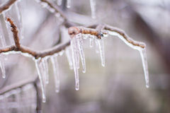 Ice storm. Ice forms on tree branches during an ice storm in Junction City, Kansas Royalty Free Stock Photo