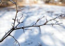 Ice storm Stock Photos