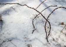 After the ice storm Royalty Free Stock Images