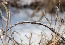 After the ice storm Stock Images