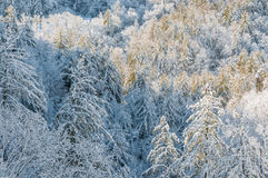 Ice Storm. Royalty Free Stock Images