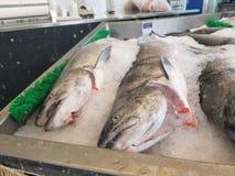 Three salmon steelhead fish on ice at local fish monger market royalty free stock images