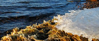 Ice texture. Ice forming in the sea water e at Baltic sea stock image