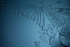 Ice texture, macro, blue broken cold the background Stock Photography