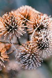 Ice on thistle Stock Image
