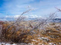 Ice-tipped arctic vegetation struggling to grow on a summit in the rockies. Frozen branches on a barren hilltop as seen in alaska in the springtime Stock Photography