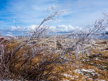 Ice-tipped arctic vegetation struggling to grow on a summit in the rockies. Frozen branches on a barren hilltop as seen in alaska in the springtime Stock Photo