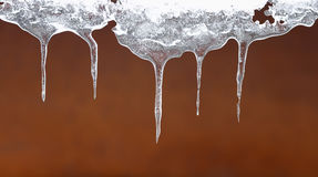 Ice transparent icicles hang on a clear winter Royalty Free Stock Images