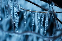 Ice on a tree Stock Images